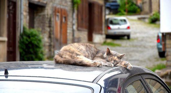 voyager en voiture avec son chat mode d 39 emploi pr vention routi re. Black Bedroom Furniture Sets. Home Design Ideas